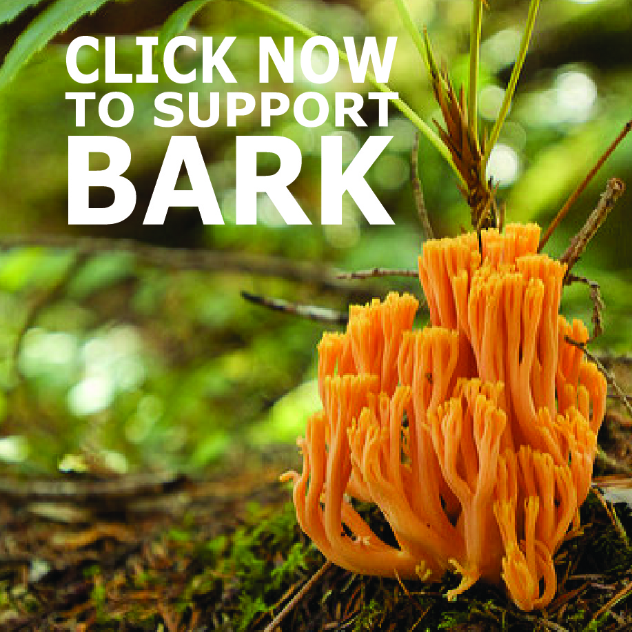 Coral mushroom Mt Hood National Forest donate to Bark